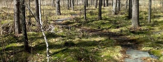 Quaking Bog is one of Locais curtidos por John.