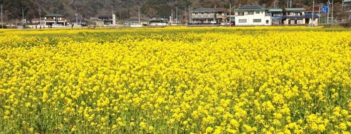 道の駅 下賀茂温泉 湯の花 is one of 伊豆.