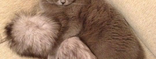 Мой домик is one of Favorite Cats.