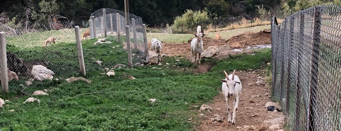 Tangala Goat Farm - Artisan Farmstead Creamery is one of Muğlaa <3.