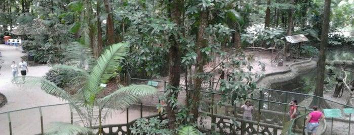 Bosque Rodrigues Alves - Jardim Botânico da Amazônia is one of Belém - Turistão Bonzão.