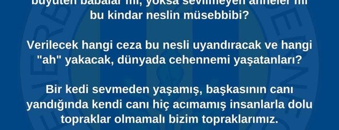 Ağaoğlu Maslak 1453 is one of Posti che sono piaciuti a Beytullah Aksoy.