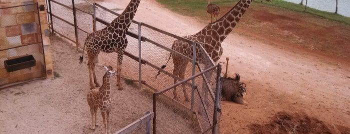 Parque Zoológico del Bicentenario: Animaya is one of Lugares favoritos de Rick.