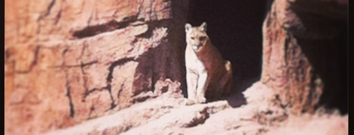 Arizona-Sonora Desert Museum is one of Lisaさんのお気に入りスポット.