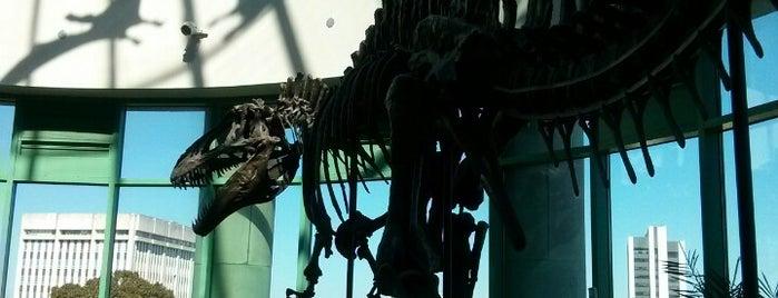 ノースカロライナ自然科学博物館 is one of Raleigh Favorites.