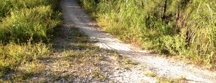 Virginia Key MTB Trails is one of Miami Must Visit.