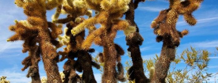 Cholla Cactus Garden is one of Locais curtidos por Karl.