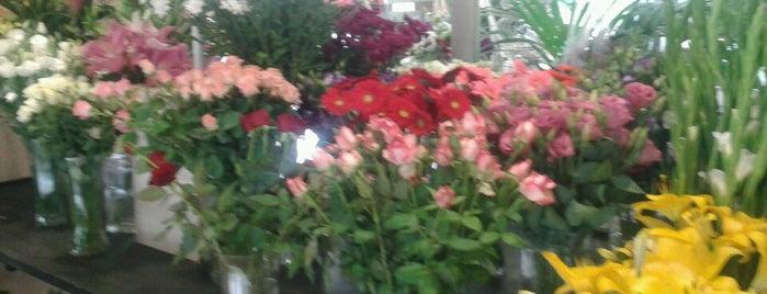 Beyaz Lale Çiçekçilik is one of Mert'in Beğendiği Mekanlar.