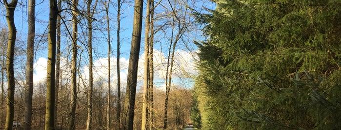 Zoniënwoud - Promenade Flossendelle Wandeling is one of Brusselicious.