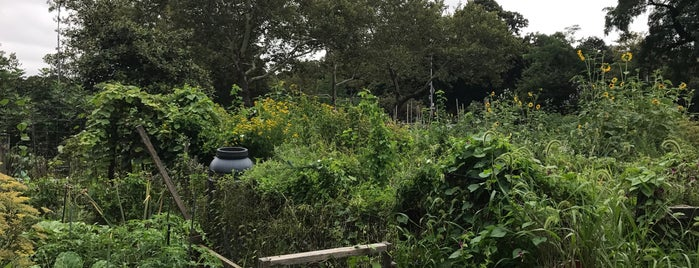 Hattie Carthan Community Garden is one of Bed Stuy.