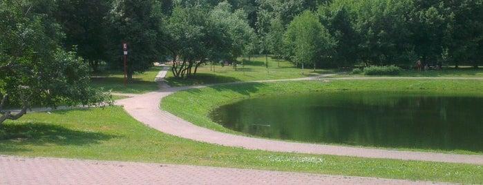Новочерёмушкинский пруд is one of สถานที่ที่ Dor ถูกใจ.