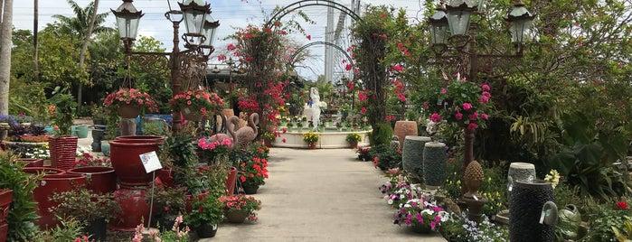 In Living Color Garden Center is one of Tempat yang Disukai Carl.
