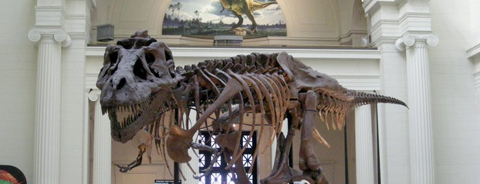 The Field Museum is one of Best Museums in the US.