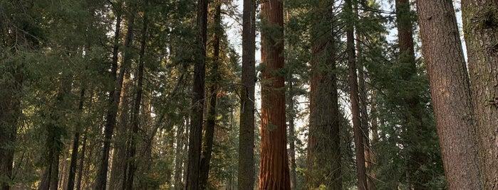 Giant Trees Meadow is one of Deniz 님이 좋아한 장소.