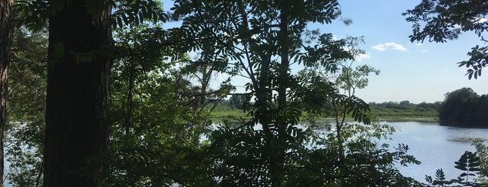 Озеро Глухая Яма is one of imntsさんのお気に入りスポット.