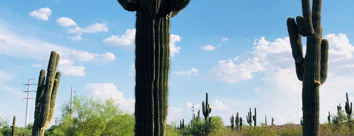 Sonoran Desert Nature Loop Trail is one of Steve's To Do.