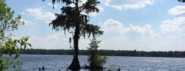 Jones Lake State Park is one of NC's Best-Kept Secrets.