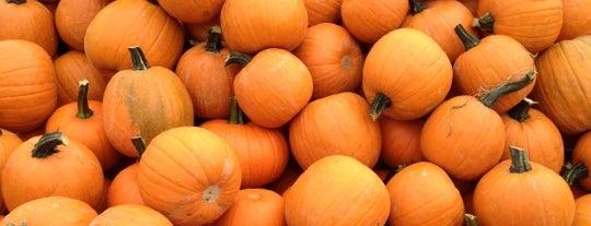 Carpinito Bros Pumpkin Patch is one of Lugares favoritos de T R.