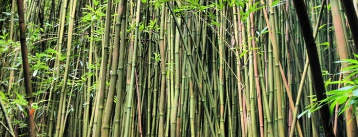 Bamboo Forest is one of Hawaii.