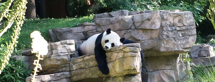 Smithsonian's National Zoo is one of A Day in D.C..