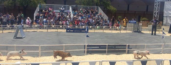 San Mateo County Fair is one of Karsten 님이 좋아한 장소.