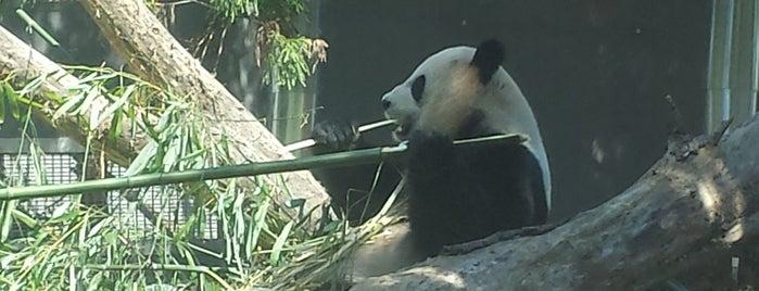 スミソニアン国立動物園 is one of Dさんのお気に入りスポット.