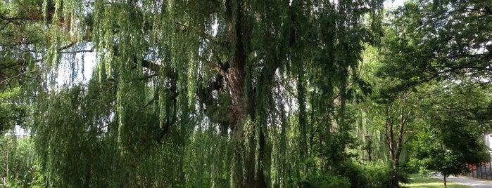 Fenway Park Swamp is one of Lieux qui ont plu à Khalil.