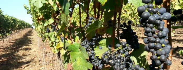 Lange Winery is one of Oregon.