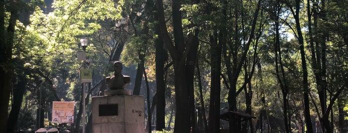 Parque México is one of DF Top Picks.