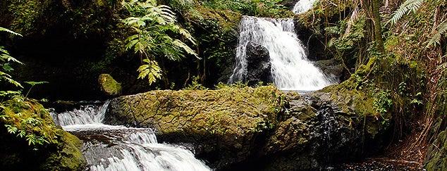 Hawaii Tropical Botanical Garden is one of Big Island.