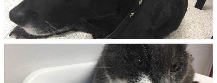 Bloomingrove Veterinary Hospital is one of Marcie'nin Beğendiği Mekanlar.