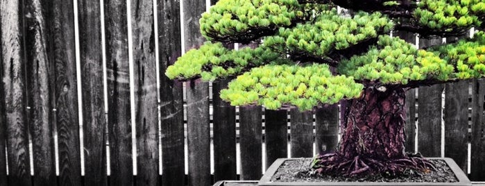 National Bonsai and Penjing Museum is one of Washington DC.
