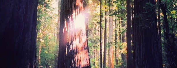 Humboldt Redwoods State Park is one of Cali.