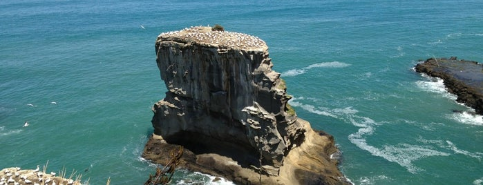Muriwai Beach Gannet Colony is one of Новая Зеландия.