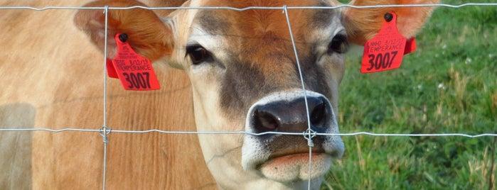 NCSU Dairy Farm is one of Tempat yang Disukai Matthew.