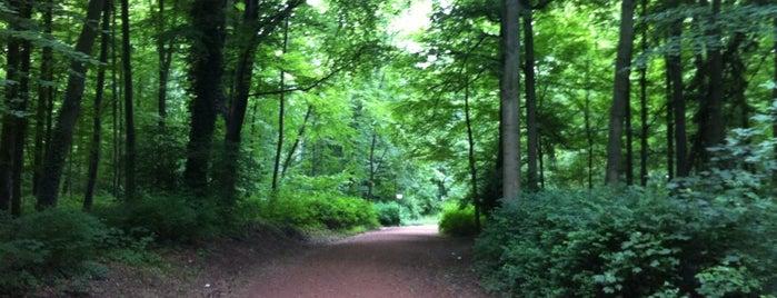 Ter Kamerenbos / Bois de la Cambre is one of Hello, Brussels.
