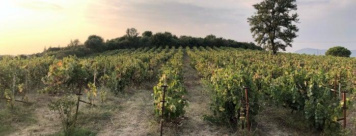 ambelonas_corfu / vineyard is one of Corfu, Greece.