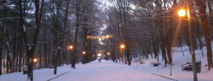 Pădurea Trivale is one of Lieux qui ont plu à Slysoft.