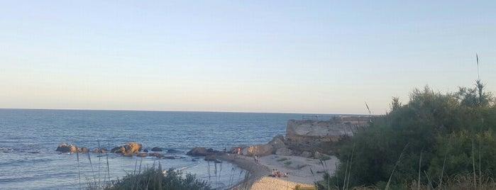 Desembocadura del Riu Sènia is one of Alberto : понравившиеся места.
