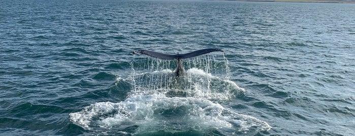Whale Watching Hauganes is one of Daníel Sigurður 님이 좋아한 장소.