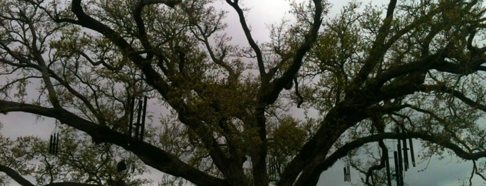 City Park - The Singing Oak is one of New Orleans.