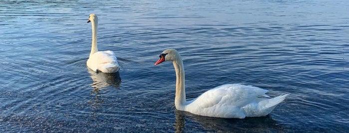 Lago di Bracciano is one of путешествия.