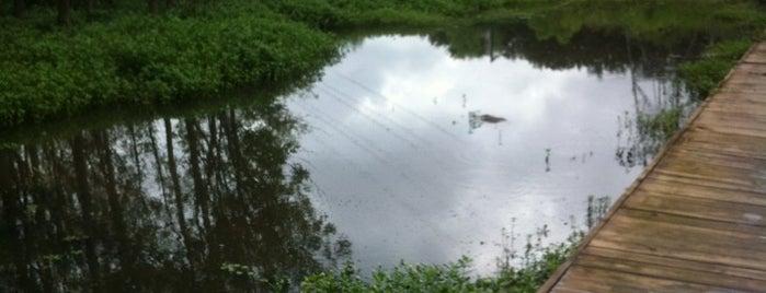 Four Mile Creek Greenway is one of Tempat yang Disukai Brigitte.