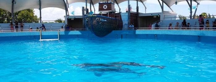 Miami Seaquarium is one of US - Must Visit ( East Coast).