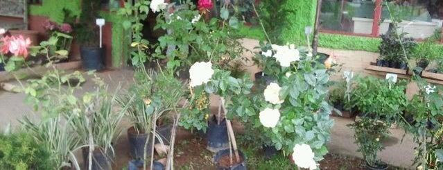 Floricultura Roselanche is one of Lugares favoritos de Dade.