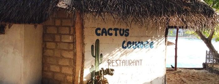 Cactus Lounge is one of Tobi : понравившиеся места.