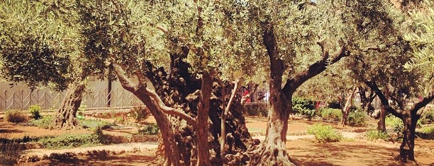 Garden of Gethsemane is one of Orte, die Carl gefallen.