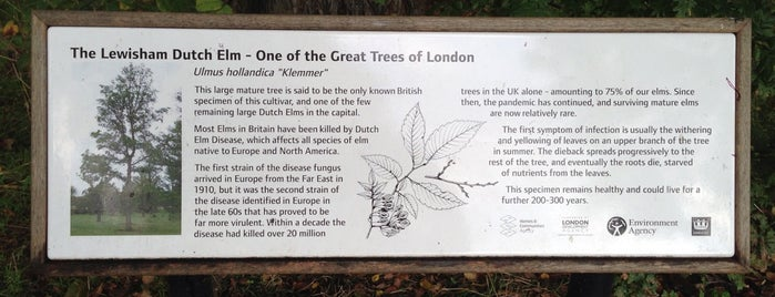 The Lewisham Dutch Elm is one of The Great Trees of London.