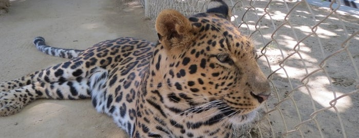 Exotic Feline Breeding Compound's Feline Conservation Center is one of Zoos/Aquariums in CA.