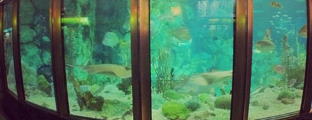 Shedd Aquarium is one of Lugares favoritos de Nick.